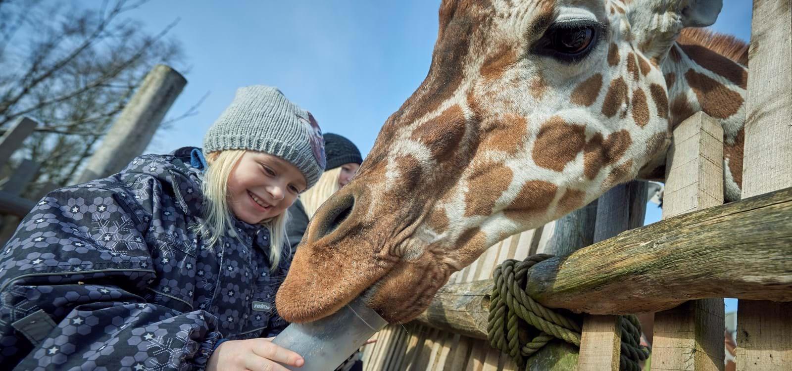 ordsprog i dyr odense zoo kort