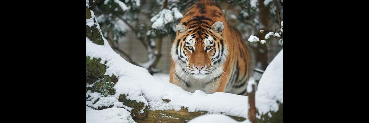 rabatter til odense zoo
