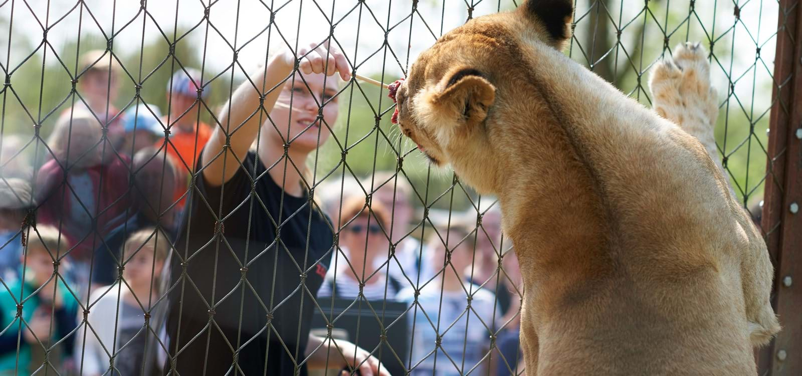 odense zoo kort escortfuide