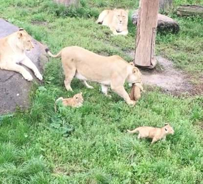 odense zoo job