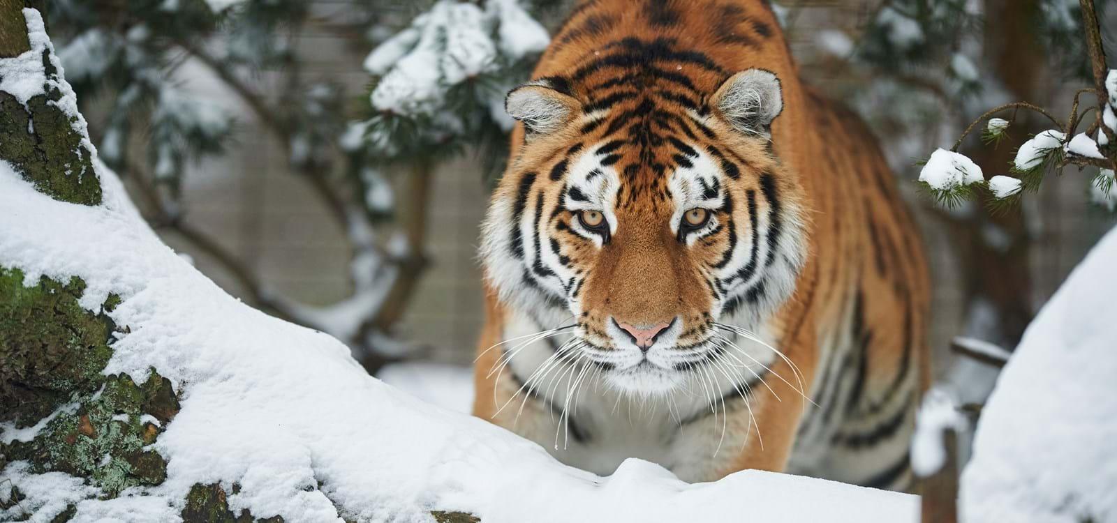 www eroguide com odense zoo kort