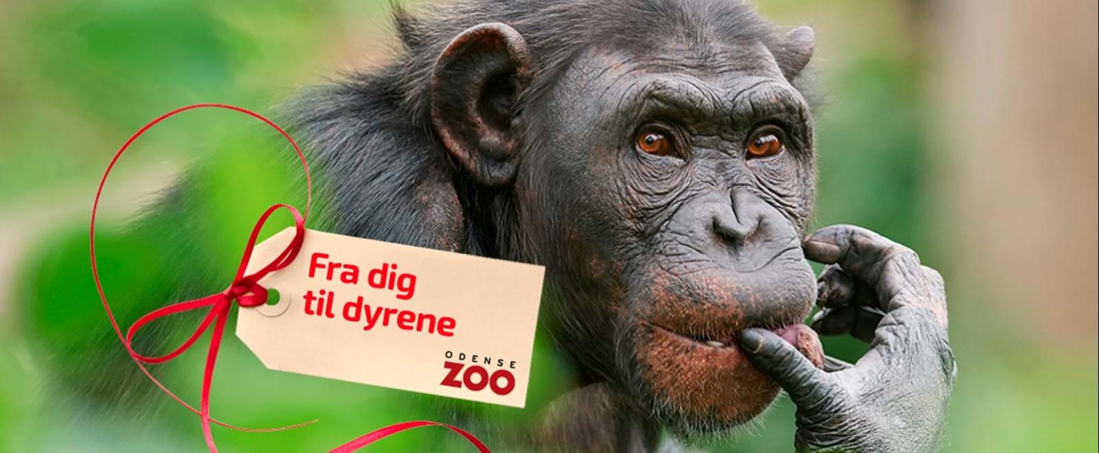 Zoo årskort gavekort campingpladser jylland billig